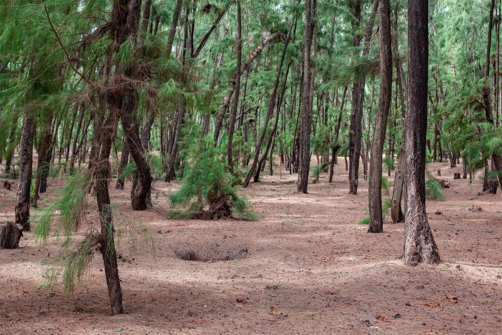 Forêt Olympique CIO Mali Senegal Dakar 2026 Ecolosport